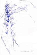 Nephrology2