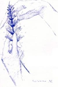 Nephrologia