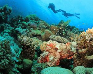 Búvárkodás az Aquabai-öbölben